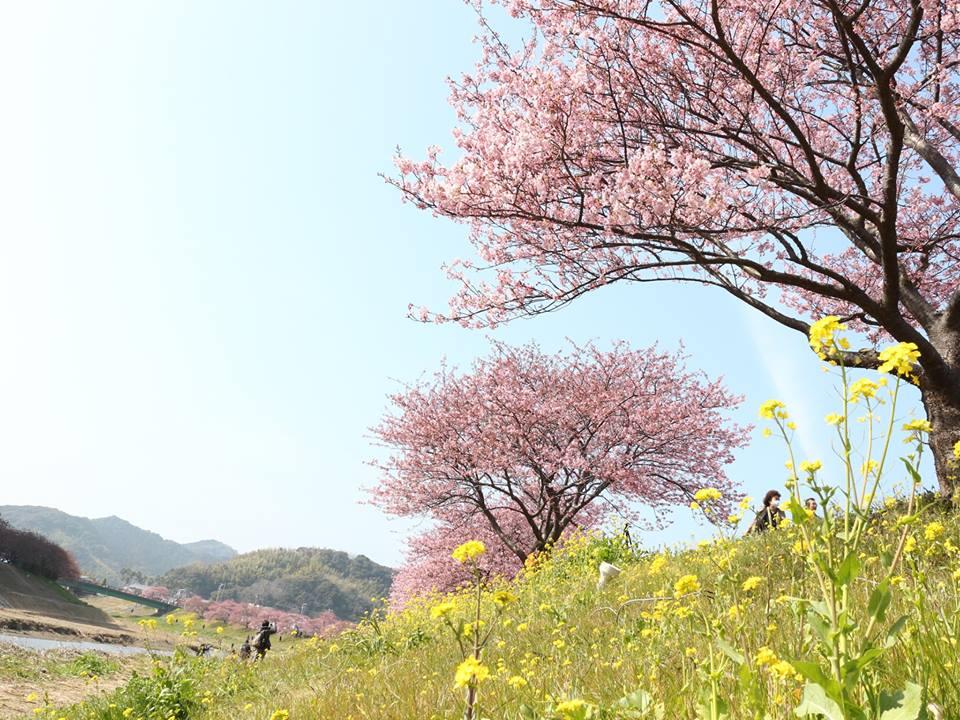 第18回みなみの桜と菜の花まつり