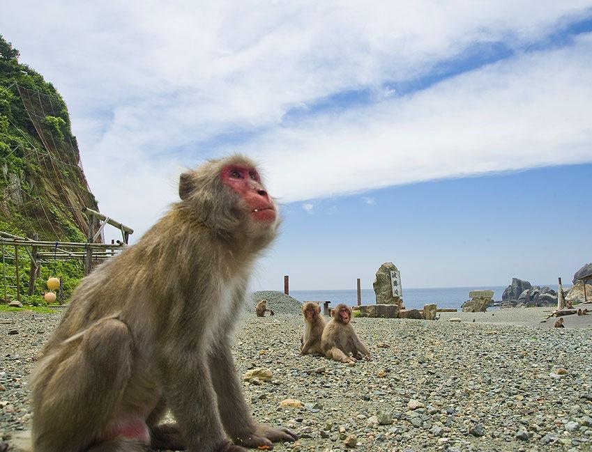 波勝崎苑お猿まつり
